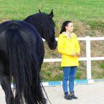 Pferdegestütztes Coaching Feedback